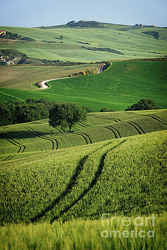 Curvy lines in Tuscany by IPics Photography