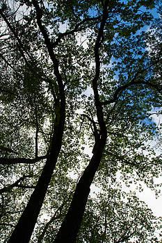 Karol Livote - Curvy Trees