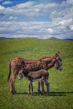 Ray Van Gundy - Custer State Park Burros