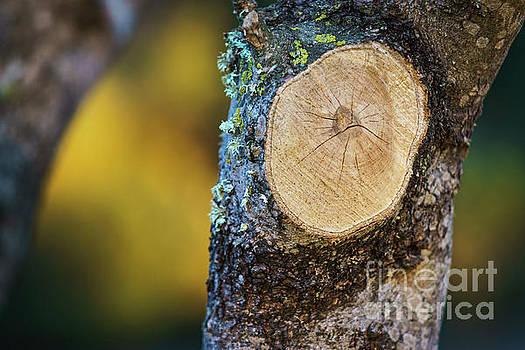 Cut Tree at Rio San Pedro Cadiz Spain by Pablo Avanzini