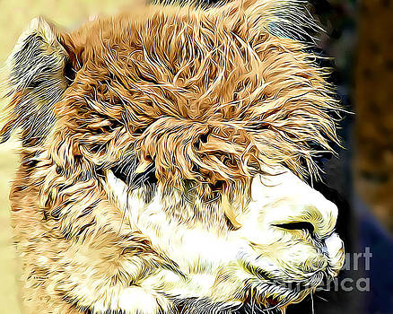 Soft And Shaggy by Kathy M Krause