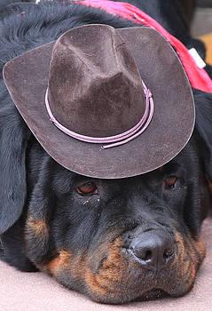 Cute Dog by Darren Kearney