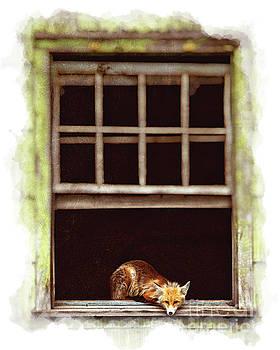 Cute Fox in Abandoned House by Katya Horner