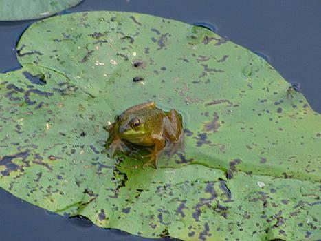 Tammy Bullard - Cute Frog