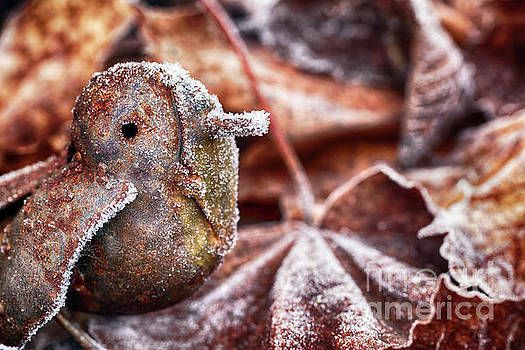 Cute frozen little bird and leaves by Simon Bratt Photography LRPS