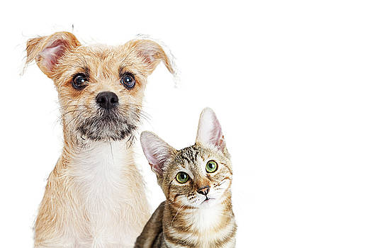 Cute Kitten and Puppy Closeup on White With Copy Space by Susan Schmitz
