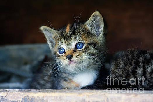 Jill Lang - Cute Kitten Face