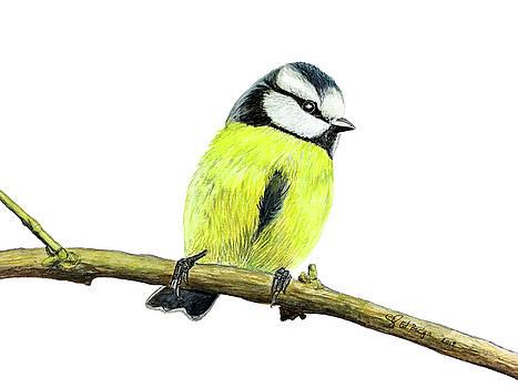 Cute Little Bird by Ed Berlyn