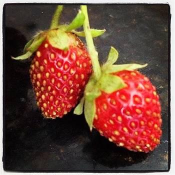 Cute Little Strawberries Growing In Our by Elizabeth Dominguez