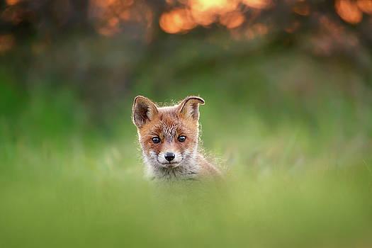 Cute Overload Series - Cute Baby Fox by Roeselien Raimond
