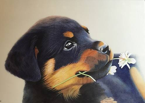 Cute puppy  by Ankit