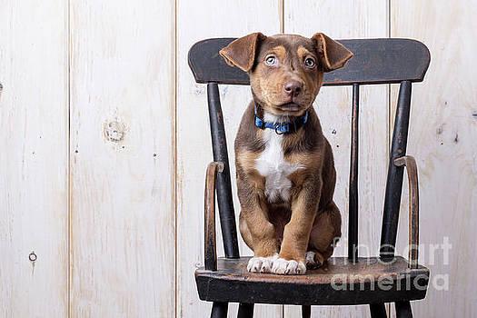 Cute Puppy dog on a high chair by Edward Fielding