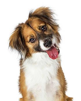 Cute Small Happy Dog Tilting Head Looking Forward by Susan Schmitz