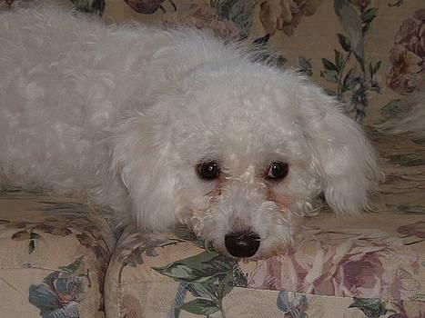 Cute White Dog by Katie Washburn