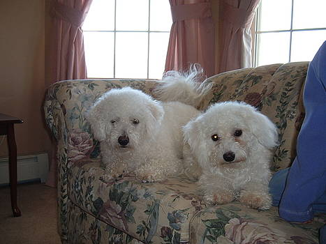 Cute White Puppies by Katie Washburn