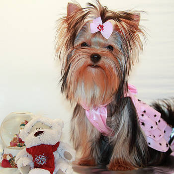 Cute Yorkie Puppy In Pink Dress by Yana Reint