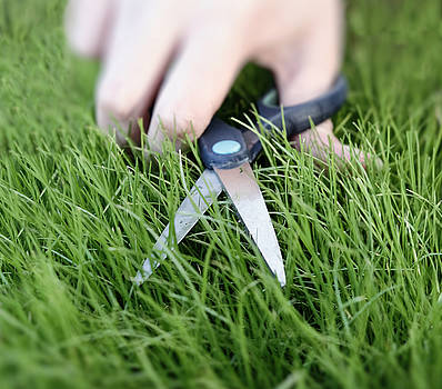 Cutting the grass with a pair of scissors by Adrian Hancu