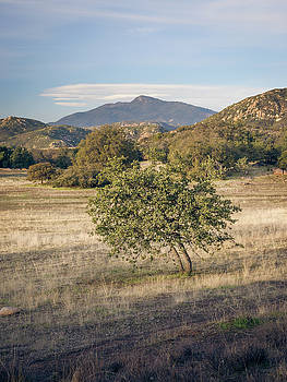 Cuyamaca Views and Young Engelmann Oak by Alexander Kunz