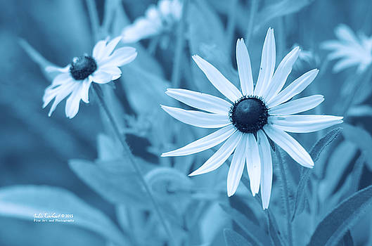 Cyan Beauty by Julie Everhart