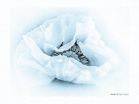 The Beauty Of Cyanotype Poppy by Mona Stut