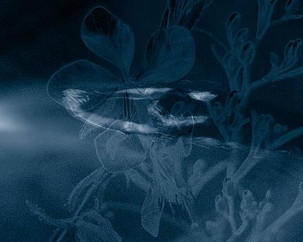 Cyanotype Swimmer by Trish Hale