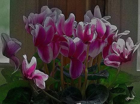 Cyclamin Beauty by Julie Grace