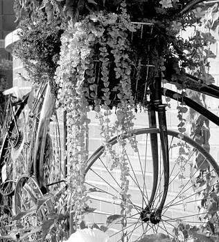 Cycling by Oksana Pelts