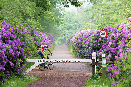 Cyclist In Rhododendron Lane by Hans Engbers