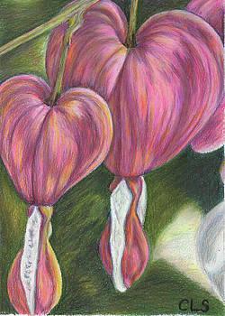 Cynthia's Bleeding Hearts by C L Swanner