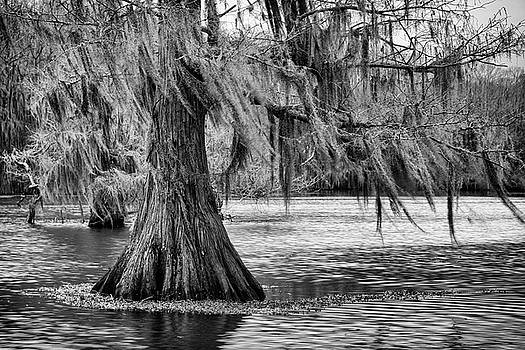 Mary Lee Dereske - Cypress at Caddo Lake