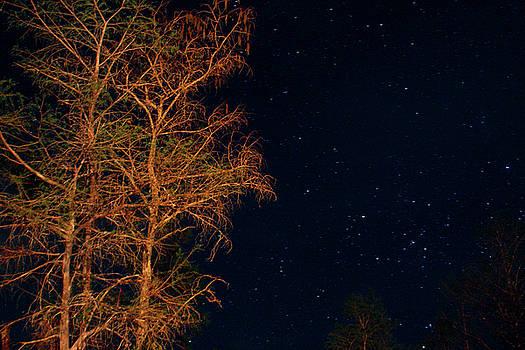 Cypress at night by Drew Smith