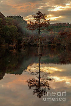Cypress at Sunset by Iris Greenwell
