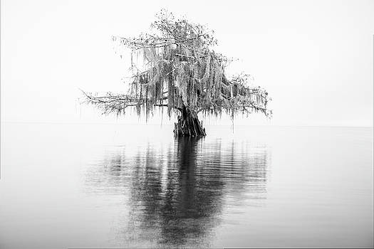 Cypress in black-and-white by Andy Crawford