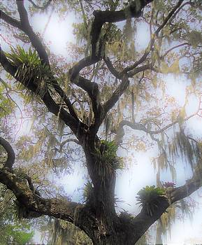 Cypress In The Mist by Ann Johndro-Collins