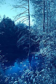 Nina Fosdick - Cypress in the River