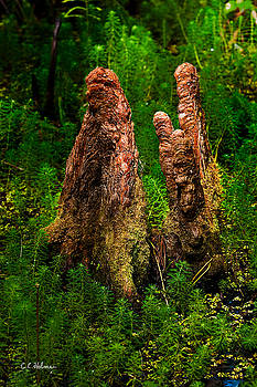 Christopher Holmes - Cypress Knees