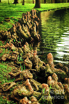 Cypress Knees Overload by JB Thomas