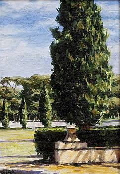 Cypress by Lydia Martin