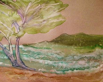 Cypress of Carmel Beach by Peggy Leyva Conley