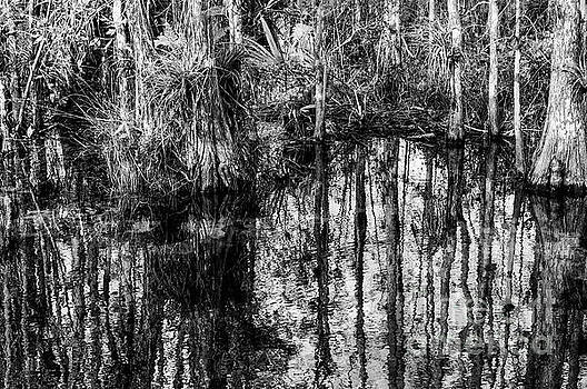 Bob Phillips - Cypress Reflections in Black and White