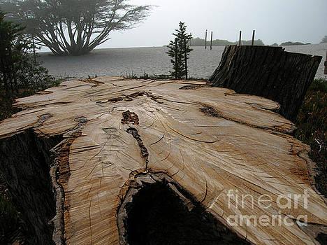 Cypress Stump by James B Toy