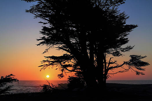 Cypress Sunset by Seil Frary