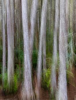 Cypress swamp by John Kearns
