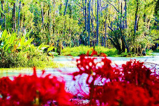 Cypress Swamp by Stacey Rosebrock