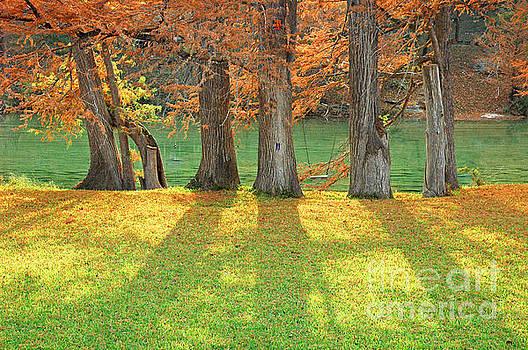 Cypress Swing by Robert Anschutz