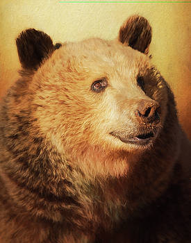 Cypress the bear by Gloria Anderson