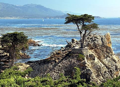 Cypress Tree Along the Sea by Lorrie Morrison