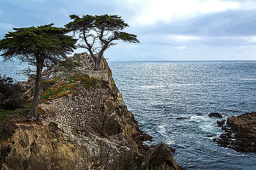 Rick Strobaugh - Cypress Tree on the Point