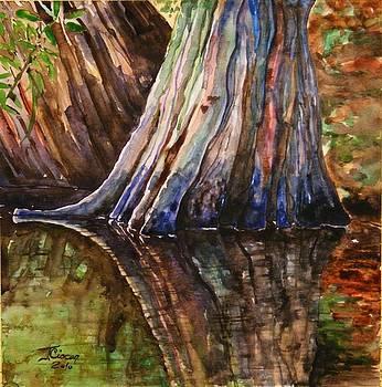 Cypress Tree Reflection by Ciocan Tudor-cosmin