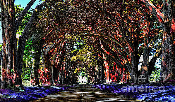 Cypress Tree Tunnel by Jason Abando